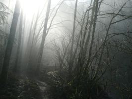 Foggy Trail by Track-Maidens