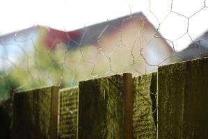 Fenced... by Trianglis