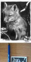 ACEO Red Fox Kit by chandito