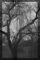 Willow Tree by agehoops