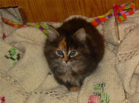 My New Kitty by Brit-Brit