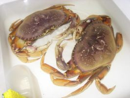 crabs by KnB-Stock