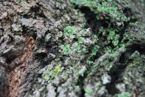 Moss Texture 02. by stock-basicality