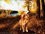Golden by whitdawg1221