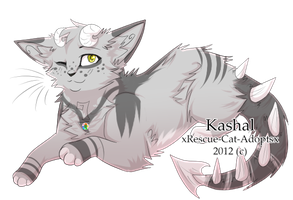 Up For Adoption: Contest by xRescue-Cat-Adoptsx