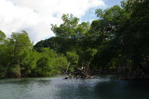 Los Haitises  National Park Dominican Republic 85 by FairieGoodMother