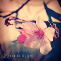 .pink flower. by multicolorlips
