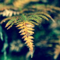 Ferns by Skycode