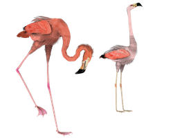 flamingos here and there png by madetobeunique