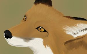 Realistic Fox by foxwithwings13
