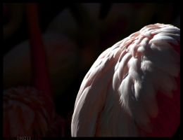 Pink Feathers by sKodOne