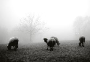sheep in the fog by secret-mirror