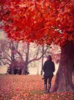 Red Autumn by anneclaires