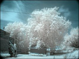 Infrared Shed by BioToxxx