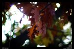Fall Leaves by bjoernst