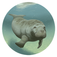 Trichechus manatus by dio-03