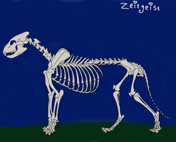 The skeleton of a lion by Spaik-The-Wolf