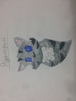 Pigeonpaw, up for adoption! by EmberliciousKitten