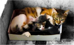 Cat Family by MichaelNN