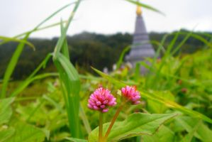flowers of the temple by naz1