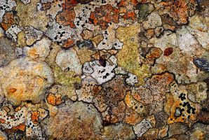 lichen by MartinAmm