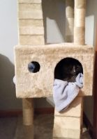Sleeping in my cat tree by VampressWolf