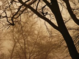 Foggy Gloom by JeremyC-Photography