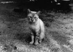 Abraham's Cat by Yadai