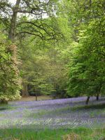 Bluebell Blanket by JoannaBromley