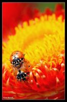 That's no lady.. by Insect-Lovers-Club