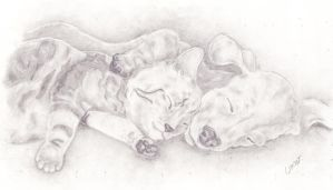 Sleeping Kitten and Puppy by caitiedidd