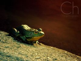 Ribbit 2 by Champineography