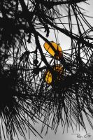 Tree of Yellow Sunglass.. by Arin91