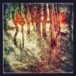 forest for the trees by rioMenor