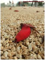 Little Red Petal. by breathofbetrayal