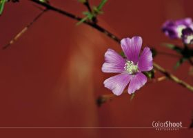 Flor Lila by ColorShoot