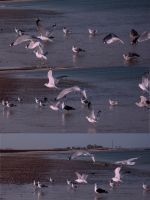 Seagulls 4 by stormlor