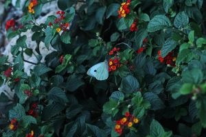 Butterfly IV by Kimberly-M