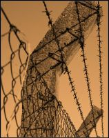 barbwire by Paralyse