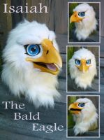 Bald Eagle by LilleahWest