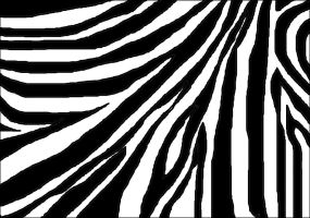 Zebra by April-Mo