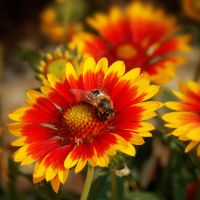 Busy little bee by Nikki-vdp