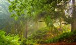 Deep In The Jungle by bongaloid