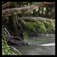 Swimming Hole by LynTaylor