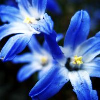 Blue and Yellow by inacom