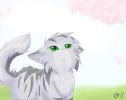.:Blossoms:. by StormFalconFire
