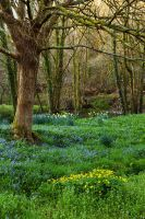Spring on the Tavy by parallel-pam