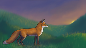Fox in a Meadow at Sunset by Kunzai