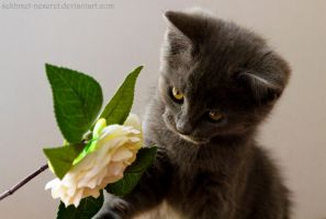 Sweety playing with a fake rose by sekhmet-neseret