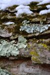 :: I'm beginning to Lichen to it :: by Number12-Photography